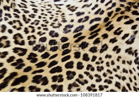 Real tiger fur