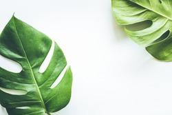 Real tropical leaves on white backgrounds.Botanical nature concepts.flat lay design