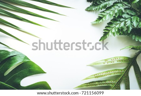 Real tropical leaves set pattern backgrounds on white.flat lay design #721156099