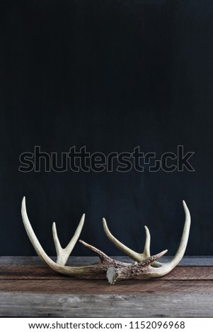Real white tail deer antlers over a rustic wooden table against a black background used by hunters when hunting to rattle in other large bucks. Free space for text.