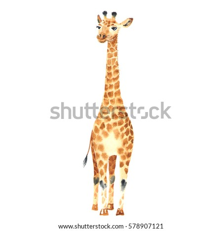 Realistic baby giraffe made in watercolor. Hand drawn illustration