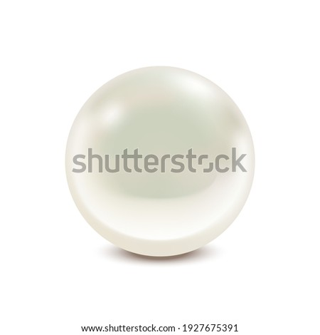 Realistic Detailed 3d Natural with Pearl Isolated on White Background Treasure of Sea. illustration of Natural Jewel