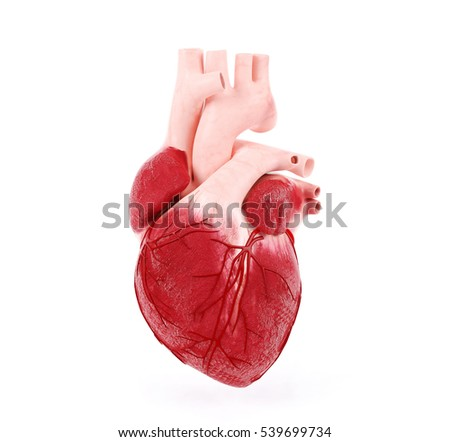 Realistic human heart, 3D rendering