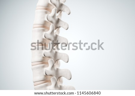 Realistic human spine illustration. Back view on the white background. 3d render.