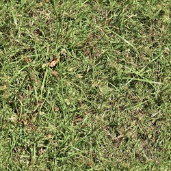 Realistic seamless grass texture in high resolution with more than six megapixel in size