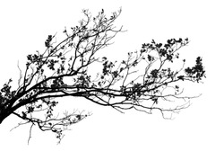 Realistic tree branches silhouette on white background