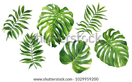 Realistic tropical botanical foliage plants. Set of tropical leaves: green palm neanta, monstera. Hand painted watercolor illustration isolated on white.