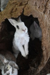 Really cute fluffy rabbits hiding in a hollow log.