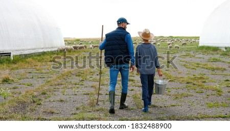 Rear on Caucasian shepherds, father and son walking the green fiels at farm with bucket. Sheep flock grazing at pasture. Back view on dad and small teen boy strolling and carrying water to cattle. Foto stock ©