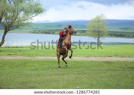 rear up horse pond  Stok fotoğraf ©