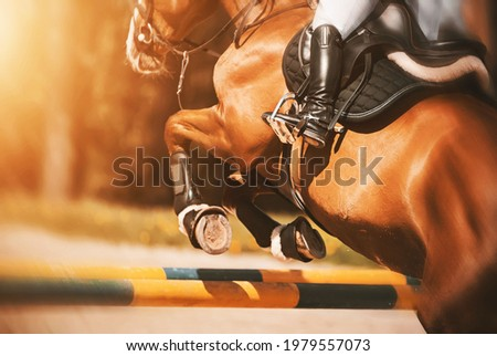 Rear view as a bay racehorse with a rider in the saddle quickly jumps over the high yellow barrier in a show jumping competition, illuminated by sunlight. Horse riding. Equestrian sports. Foto stock ©