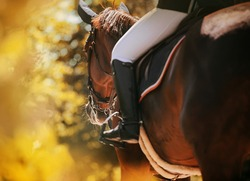 Rear view of a bay horse with a rider in the saddle, which walks through the park among the autumn yellow foliage of trees on a sunny warm day. Equestrian life. Horse riding.