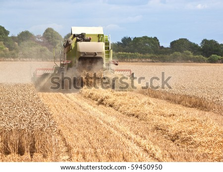 rear view of a combine harvester collecting wheat from a field - stock photo