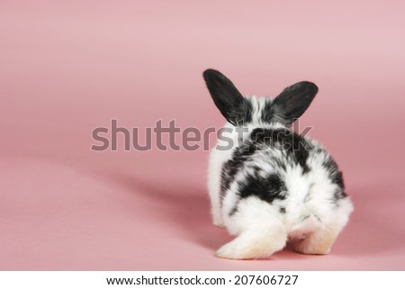 Rear view of a pet rabbit against pink background