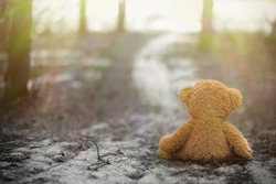 Rear view of Teddy sitting on the ground and looking at the sunrise. Lonely plush sat alone in the woods in black and white. Black and white image of teddy bear sitting on the road in the forest alone