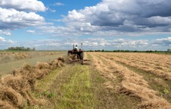 Rear view of tractor collecting hay with old wheel rake in field in spring