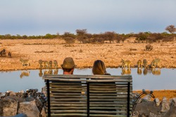 Rear view of young couple observing animals in african savanna, Etosha National Park, Namibia