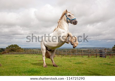Rearing horse