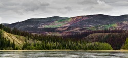 Recently burnt boreal forest in the Yukon River valley, Yukon Territory, Canada.