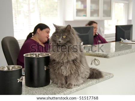 receptionists on the phone at a veterinary office - stock photo