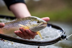 Recreational Fly Fishing for trout outdoors with fly tying nymphs using Czech nymphing technique in Switzerland.