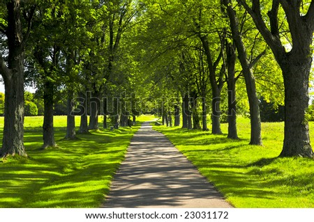 Recreational path in green park lined up with trees