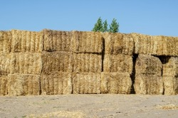 Rectangular bales of dry hay against the blue sky. Storage of dry herbs for feeding cows and other animals. Yellow straw in rectangular bales.