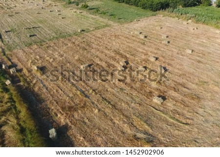 Rectangular bales of hay on the field. Hay harvest #1452902906