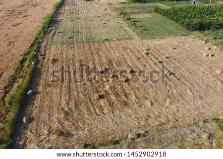 Rectangular bales of hay on the field. Hay harvest #1452902918