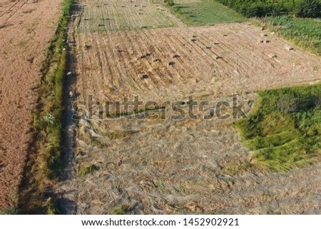 Rectangular bales of hay on the field. Hay harvest #1452902921