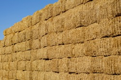 Rectangular stacks of dry hay in an open-air field. Storage of dry herbs for feeding cows and other animals. Yellow straw in rectangular bales.