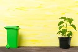 Recycle bin and seedlings on yellow background. Organic threads concept