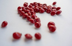 Red Adenanthera pavonine seeds or Biji Saga on white background. Selective focus with depth of field camera effect