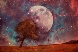red alien landscape with alone tree over the moon night sky- elements of this image are furnished by NASA