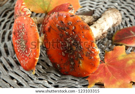 red amanitas, on wicker background - stock photo