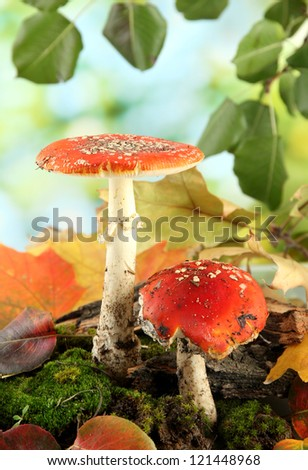 red amanitas with moss, on green background
