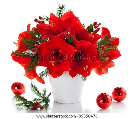 Red amaryllis in vase with christmas decorations stock for Amaryllis christmas decoration