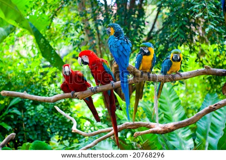 Stock Photo Red and blue macaw resting on branches of tree