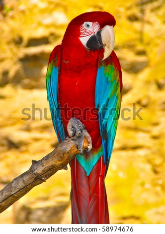 Shutterstock Red-and-green Macaw