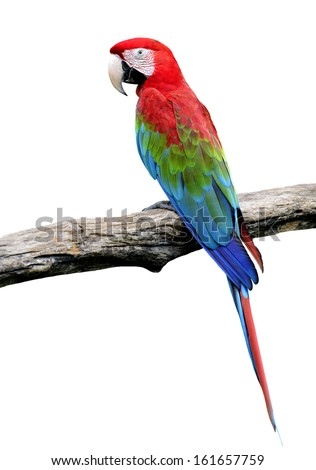 Red-and-green Macaw Parrot bird isolated on white background (green-winged macaw)