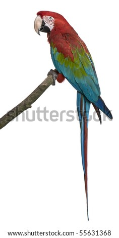 Shutterstock Red-and-green Macaw perching on branch in front of white background
