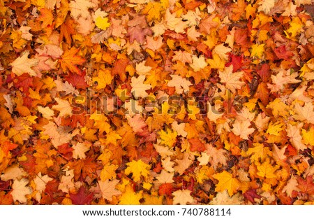 Stock Photo Red and orange autumn leaves background. Outdoor. Colorful backround image of fallen autumn leaves perfect for seasonal use. Space for text.