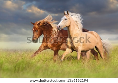 Red and palomino horse with long blond mane in motion on field #1356162194