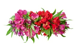 Red and pink alstroemeria flowers branch on white background isolated closeup, lily flowers bunch for decorative border, holiday poster, design element for greeting card, floral pattern, beauty banner