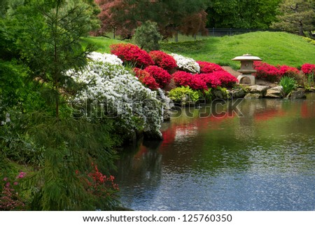 red and pink azaleas and other colorful and fragrant flowers blooming in the spring time along side a small koi pond