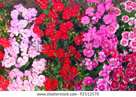 red and pink coloful flower as background
