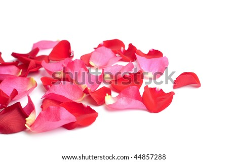 stock photo : red and pink rose petals isolated