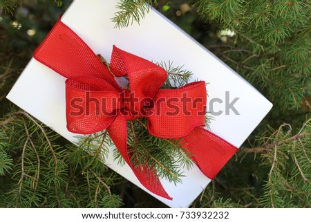 red and white christmas gift on an evergreen background - An Evergreen Christmas