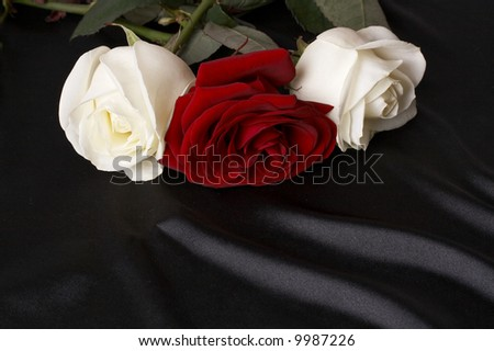 red and white roses on black satin