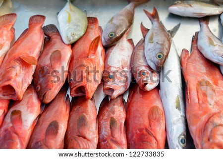 Red and white snapper at a fish market